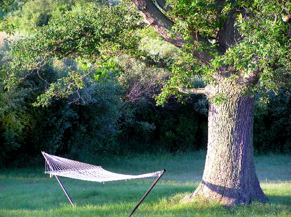 Hammockoak