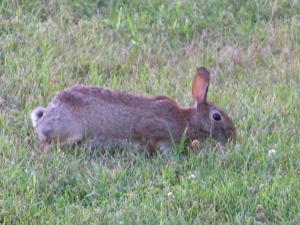 Rabbit07