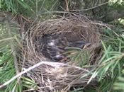 Birdinnest