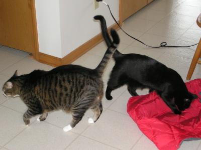 Catsvest