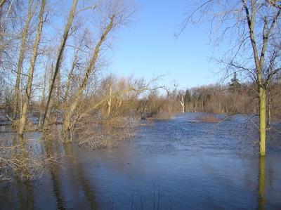 Floodtree2