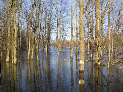 Floodtrees