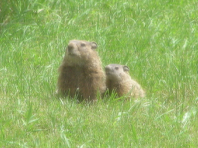 Groundhogmomandbaby